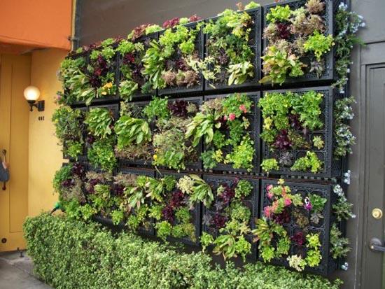 Urban Agriculture- vertical garden