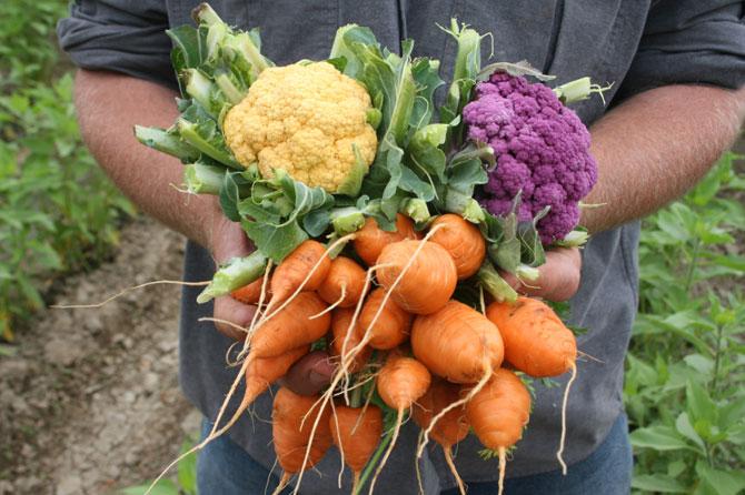 Urban agriculture - harvest