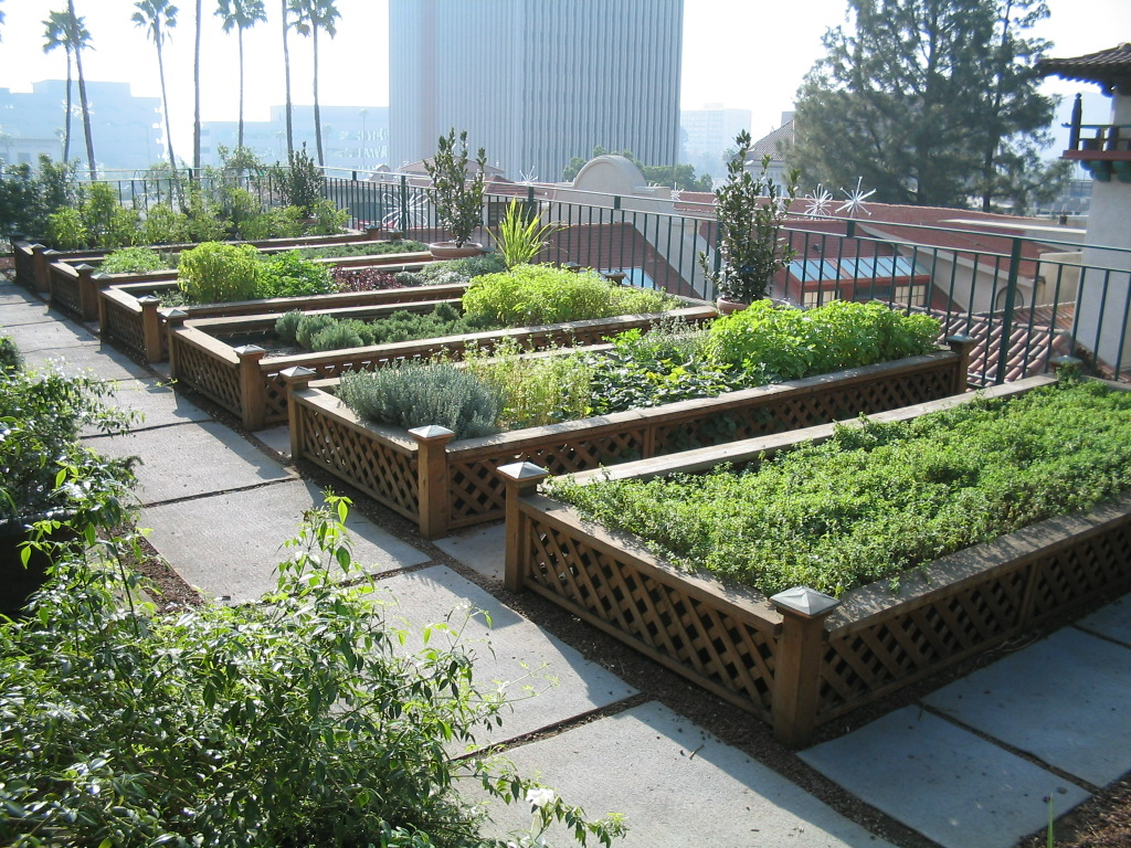 Urban agriculture- raised beds